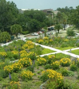 University of Florida Greenroof