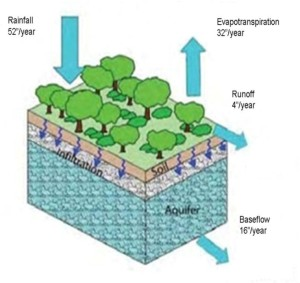 natural systems allow for infiltration and groundwater recharge